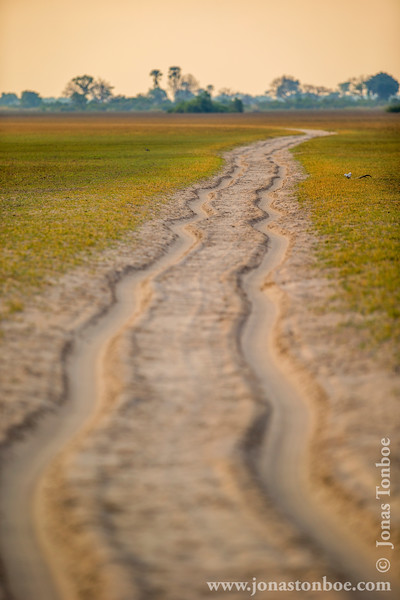 Sandy Road Through the Okavango Delta