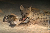 Female Spotted Hyena and Cub