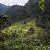 Guango