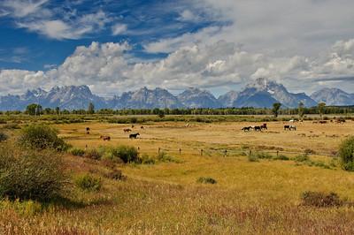 Best of Grand Teton & Yellowstone National Parks - 2009