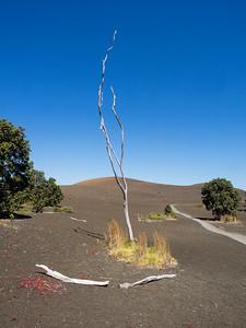 Dead tree amidst 1959 devastation of Kilauea Iki