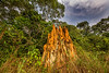 Termite Mound on the Edge of Savanna and Dry Forest