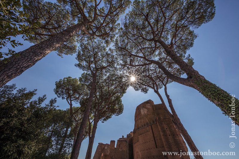 Trees and Palatine Hill Ruins