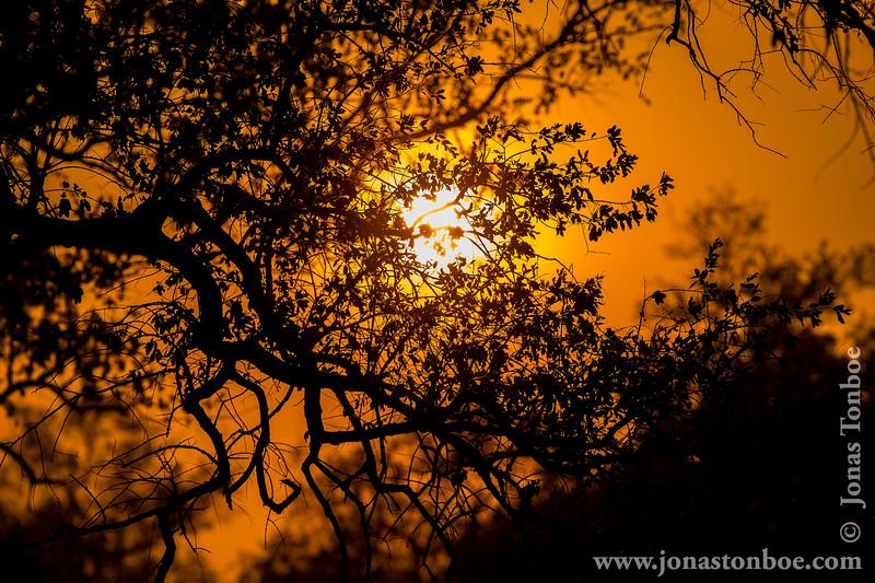 Sunset Over Luangwa Valley