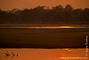 Luangwa River at Sunset