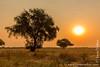 Bush at Sunset