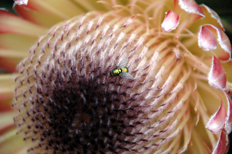 Fly on a flower.