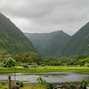 Waipi'o Valley taro field, Honokaa, HI