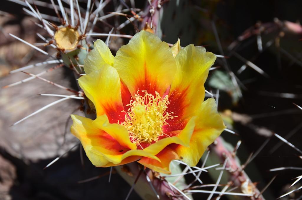 Phoenix Arizona , May 2012