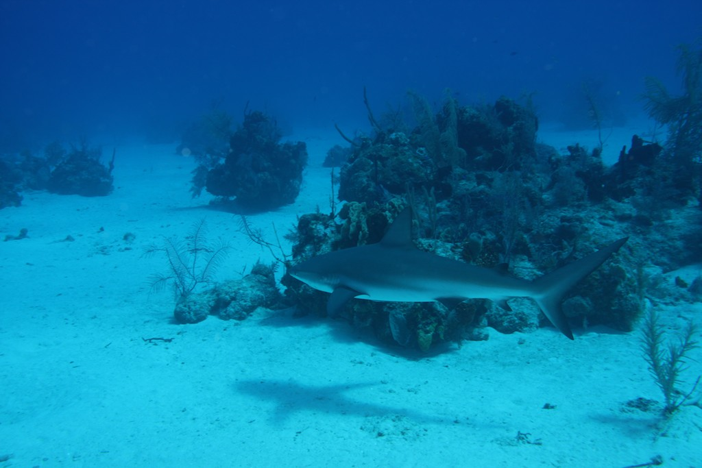 Turks & Caicos ; Feb 2012
