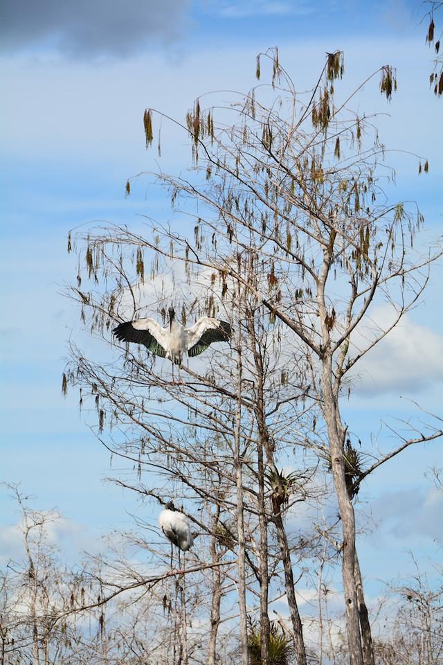 Big Cyprus , Florida ; Feb 2014