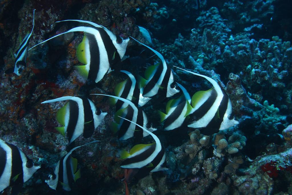 French, Polynesia ;  Nov, 2012