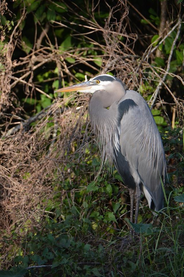 Everglades Florida ; Jan 2014