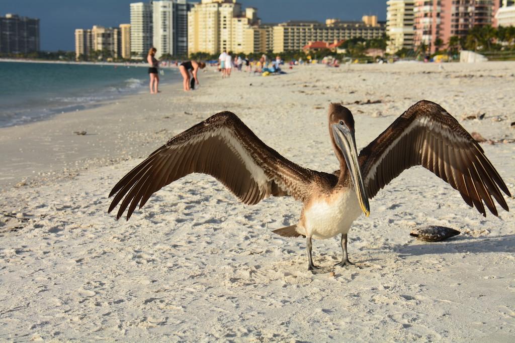 Marco Island , Florida ; Jan 2014