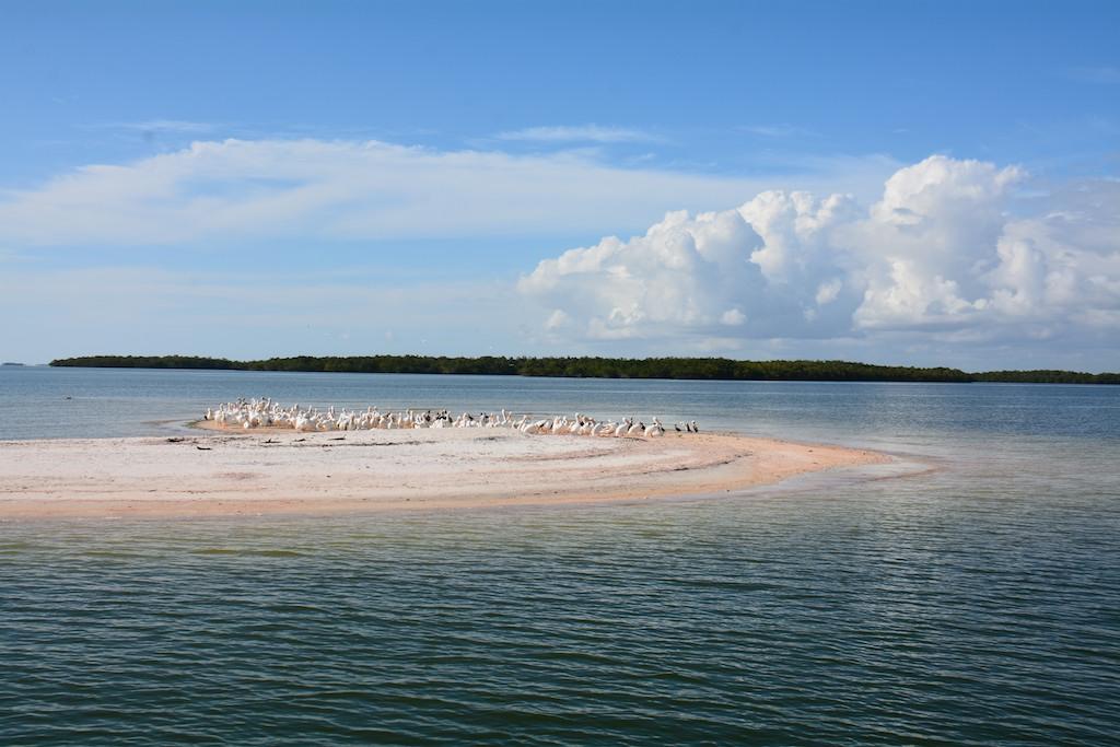 Everglades National park , Florida ; Feb 2014