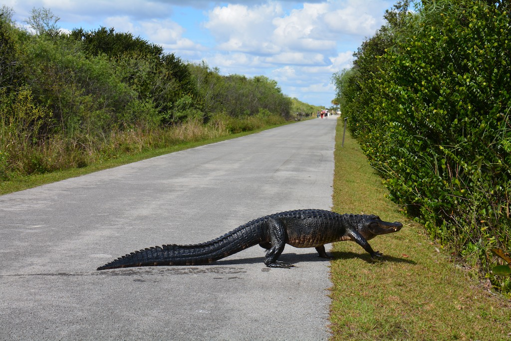 Everglades National park , Florida ; Feb 2014