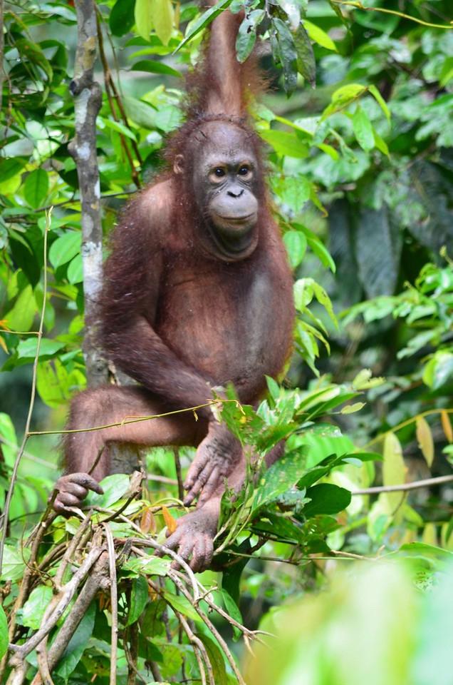 Borneo Malaysia ; Apr 2011