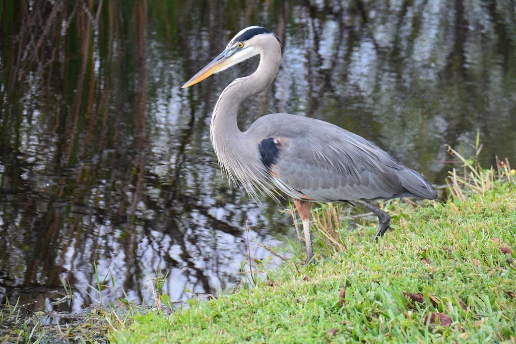 Florida ; Jan 2015