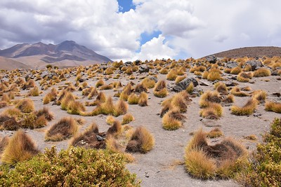 Bolivia ; Dec 2018