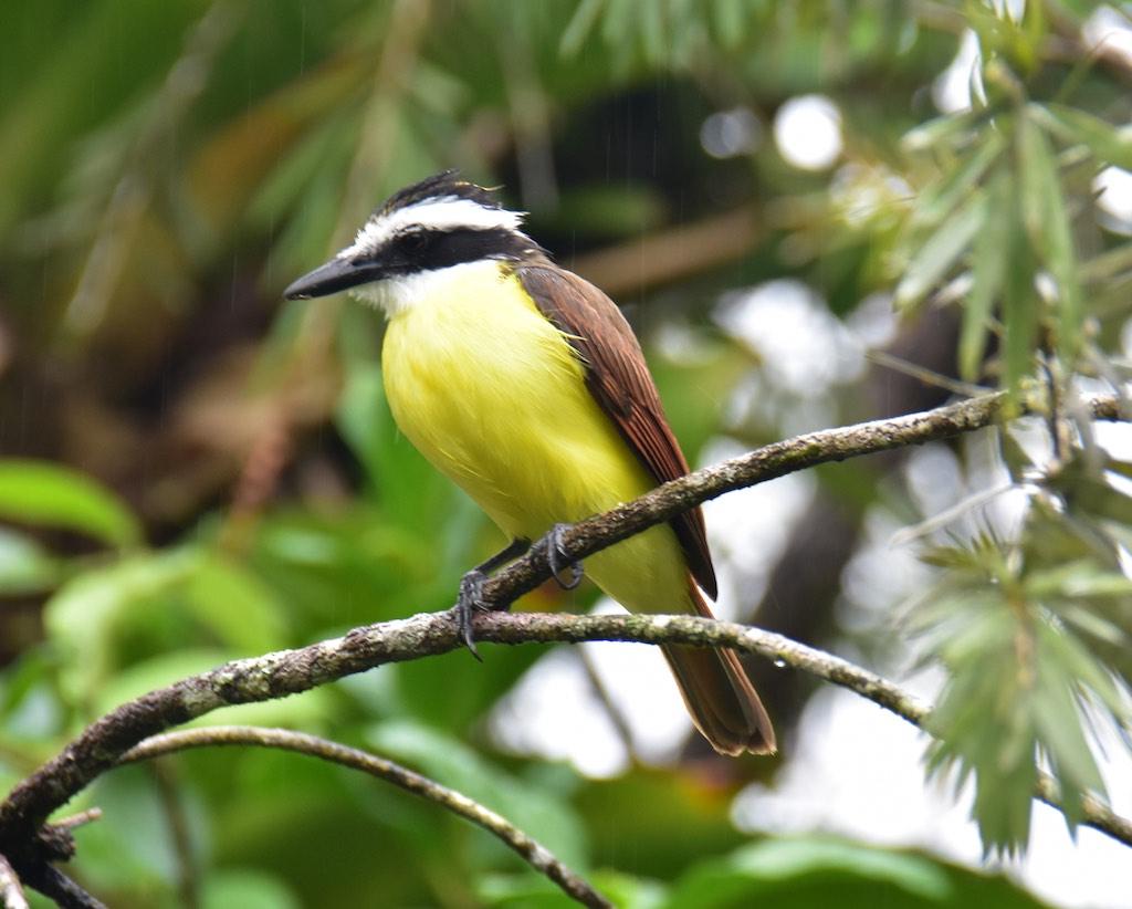 Costa Rica ; Jan 2018