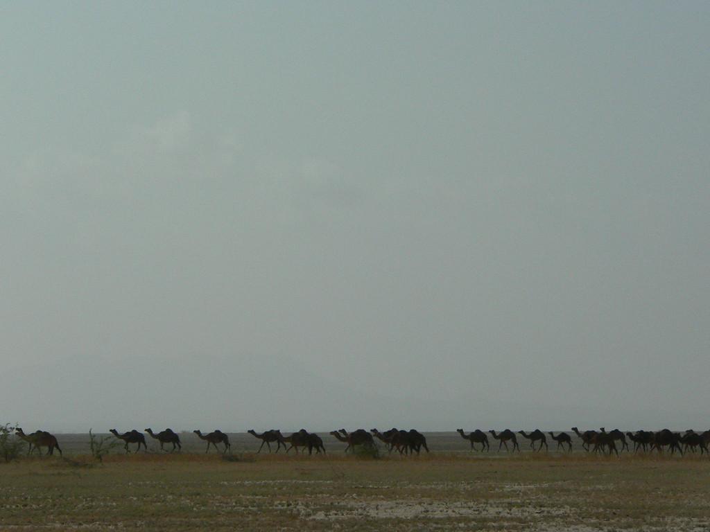 On the way to Chhari Dhand bird sanctuary