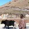 Yak herder at Pele La