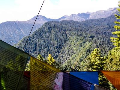 Jigme Dorji National Park - Thimphu, Bhutan.