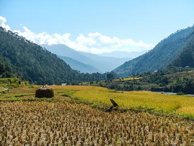 Walking through the rice fields.