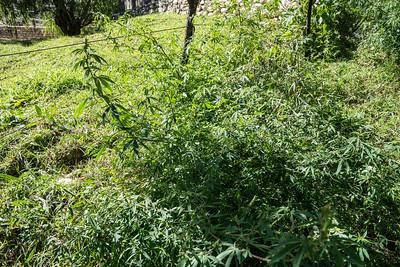 WeedsAtArchery 02891