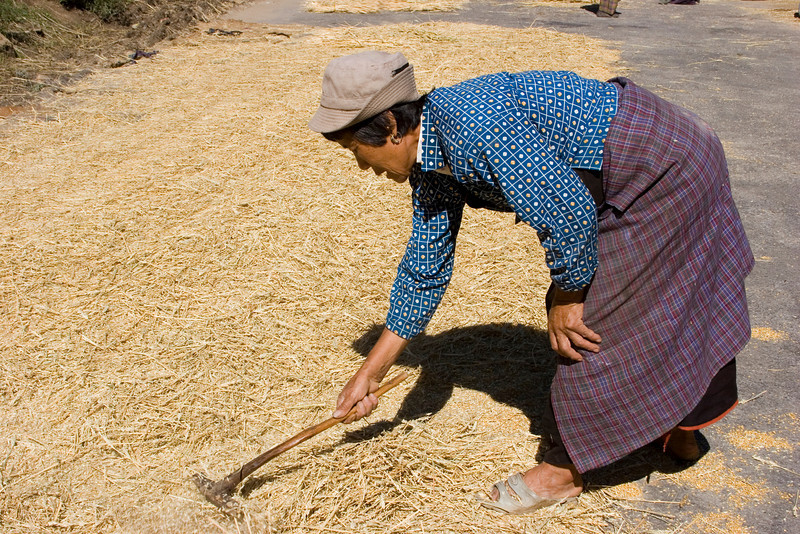 Preparing rice for the next vehicle.
