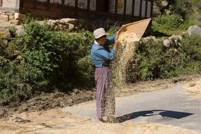 Separting rice from chaff