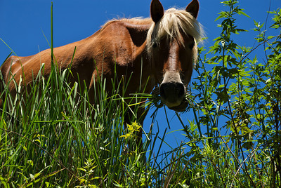 Trailside Horse (Bhutan)