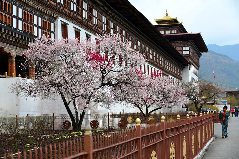 The Thimphu dzong
