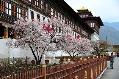 The Thimphu dzong