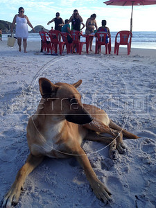"One of the beach dogs who benefitted from my order of ""Pasteis"" on Praia Grande in Arraial do Cabo, Rio de Janeiro state. (Australfoto/Douglas Engle)"