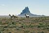 Shiprock, AZ   Wild Horses