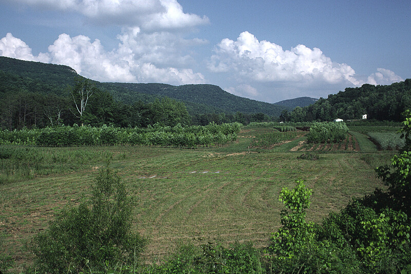 """Farm East of Lynchburg. A Farmer told me that he gets """"About 50 gallons of moonshine"""" from his land."""