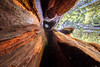 The view from inside a hollow redwood tree