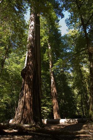 Big Basin Redwoods State Park, CA - 24 July, 2007