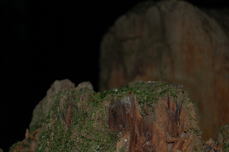 Stump at night