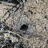 desert birds nest