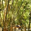Walking down into the Botanical Garden in Hilo, we passed through this Bamboo Avenue.