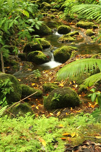 Near Akaka Falls.