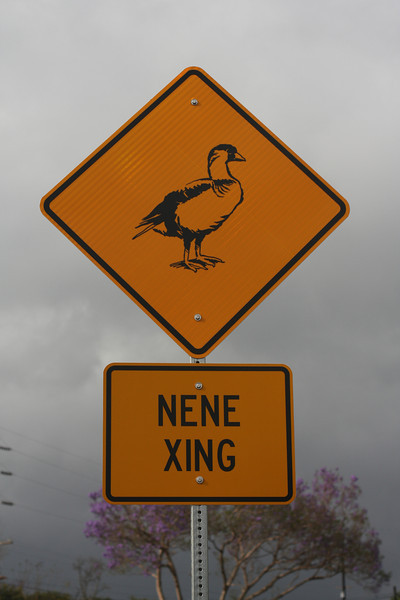 Nene's are a type of goose - they're the Hawaiian state bird.