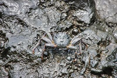 Camo Crab