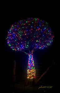TreeLights121410