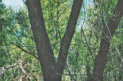 June 2000? Marsh Trail. Big Morongo Canyon Preserve Little San Bernardino Mtns, Morongo Valley, San Bernardino County, CA.