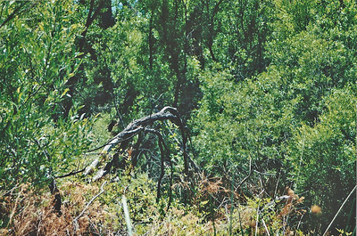 June 2000? Marsh Trail. Big Morongo Canyon Preserve Little San Bernardino Mtns, Morongo Valley, San Bernardino County, CA.