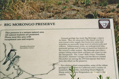 7/27/97 Big Morongo Canyon Preserve Little San Bernardino Mtns, Morongo Valley, San Bernardino County, CA.
