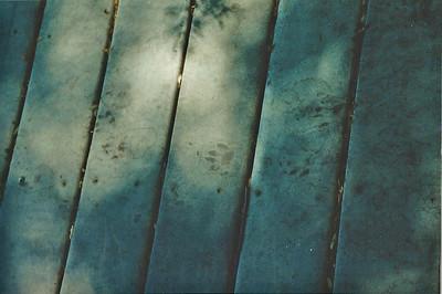 June 2000? Mountain lion tracks. Marsh Trail. Big Morongo Canyon Preserve Little San Bernardino Mtns, Morongo Valley, San Bernardino County, CA.